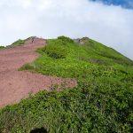 利尻島にある利尻山登山その4、高山植物を見ながらの下山